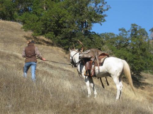 blacktail deer hunting 20100308 1182946308